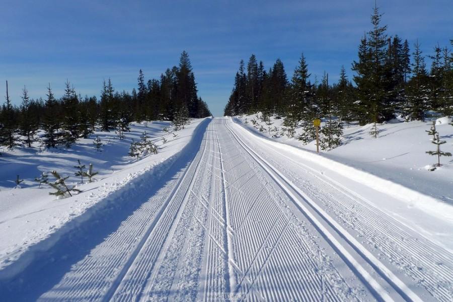 В московских лесопарках открылись лыжные трассы.jpg
